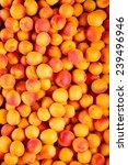 Background Of Many Ripe Apricots