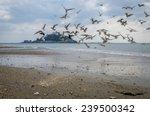 birds atet michaels mount | Shutterstock . vector #239500342