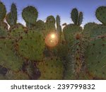 Prickly Desert Cactus With...