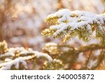 abstract pine covered with snow ... | Shutterstock . vector #240005872
