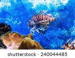 The Underwater World. Bright...