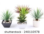a group of agave in pot... | Shutterstock . vector #240110578