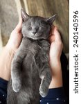 Young Gray Cat Sleeping In A...
