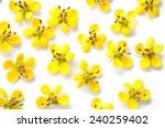 Cassia Flower.