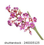 carambola starfruit flower... | Shutterstock . vector #240335125