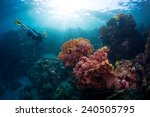 free diver exploring vivid... | Shutterstock . vector #240505795