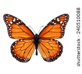 Stock photo beautiful monarch butterfly isolated on white background 240510088