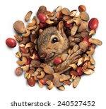 Squirrel Nut Burst Concept As ...