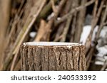 Stump In The Winter On A...