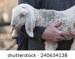 lamb with shepherd | Shutterstock . vector #240634138