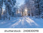 Winter Path In Forest With Sun...