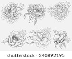 set vector drawing peony... | Shutterstock .eps vector #240892195