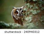 Hidden Portrait Long Eared Owl...