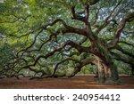 Large Southern Live Oak ...