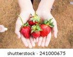 hands holding strawberries  | Shutterstock . vector #241000675