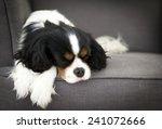 Cute Dog Sleeping On The Sofa