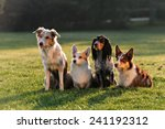 Stock photo four dogs sitting in the park 241192312
