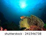 skunk anemonefish | Shutterstock . vector #241546738