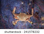 Crabs T In The Fishing Net