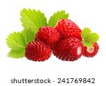 Wild Strawberry Macro Isolated...