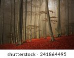 Beautiful Foggy Forest During...