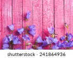 Blue Bell Flowers On A Pink...