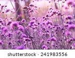 beautiful flower background   Shutterstock . vector #241983556