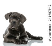 Stock photo puppy 241987942