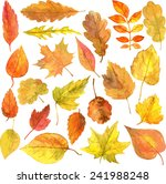 Set Of Autumn Leaves Drawing By ...