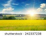 field  sunrise and blue sky | Shutterstock . vector #242337238
