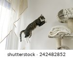 Stock photo jumping cat 242482852