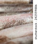 squids in a row in an abstract... | Shutterstock . vector #242559886