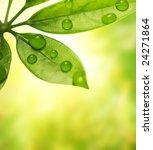 Green Leaf Over Blurred...