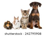 Stock photo pets 242795908