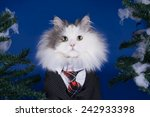 Cat Wearing A Tie And A Suit...