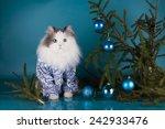 Cat Shirt Near The Christmas...