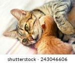Mom Cat Hugging Her Newborn...