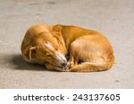 Homeless Abandoned Dog Sleepin...
