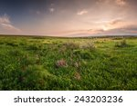 spring meadow with flowers on... | Shutterstock . vector #243203236