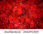 Stock photo beautiful red rose petals background 243291505