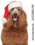 Royal Poodle In Santa Red Hat...
