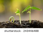 germinating seed to sprout of...   Shutterstock . vector #243446488