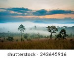 sunrise in savanah meadow | Shutterstock . vector #243645916