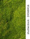 Green Algae Texture