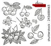 hand drawn decorative cherry...   Shutterstock . vector #243688465