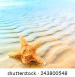 star sea shell  | Shutterstock . vector #243800548