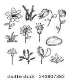 flowers icons set  vector... | Shutterstock .eps vector #243807382