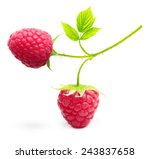 Red Ripe Berry Raspberry...