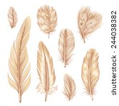 set of eight vector feather... | Shutterstock .eps vector #244038382