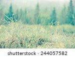 close up of grass | Shutterstock . vector #244057582